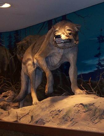 guest post - werewolves 1.png